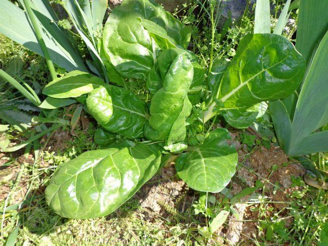 Mica grădină cu verdeață și flori. FOTO: Arhivă personală