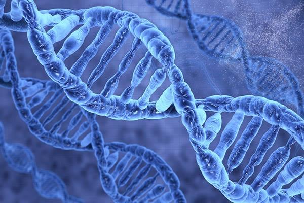 ADN-ul nostru are inclusiv, înscrise în el, detalii despre lungimea vieții noastre. Exact, ADN-ul ne programează moartea deoarece motivul principal pentru care îmbrătrânim și murim este degradarea ADN-ului, care, datorită diviziunii celulare de-a lungul timpului, ajunge să piardă din informația genetică din cromozomi.