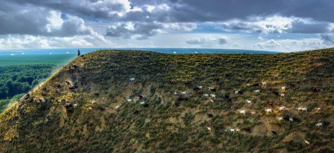 Cioban cu turma de capre pe un deal din satul Văleni. FOTO: Victor Pictor