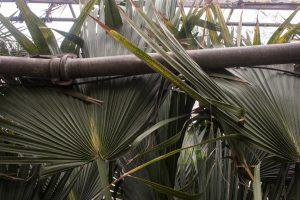 gradina botanica